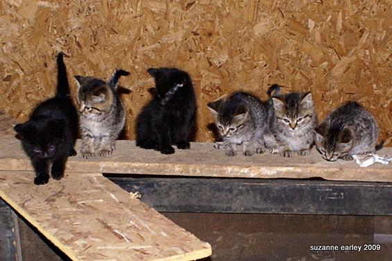 7 itty bitty kitties