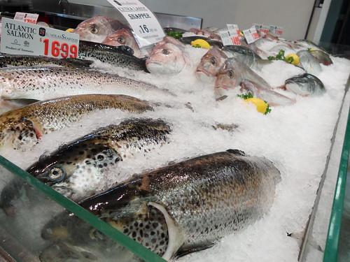 Sydney Fish Market Fish
