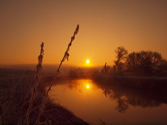 WONDERFUL WINTER SUNRISE IN 2017 P2193454 (hans 1960) Tags: winter cold outdoor nature natur golden ruhe stille stillness harmony landschaft landscape himmel sky river fluss wasser water sun sunrise sonne sonnenaufgang sol soleil atardecer licht light trees bäume heimat home land germany spiegelung reflexion mirrow