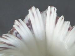 Upward (robertschodterer) Tags: philippines shell cebusugbo abigfave anawesomeshot