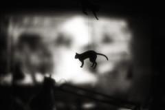 À la verticale de l'été :I (TommyOshima) Tags: leica blackandwhite film monochrome ir 50mm f10 infrared noctilux rodinal 125 m7 àlaverticaledelété