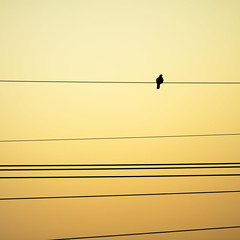 Untitled (crsan) Tags: bird lines electric alone sitting power sweden line wires photowalk l sverige 28 minimalistic 2009 sitter nykping 70200mm fgel 500x500 bsquare elledning indiasong crsan holmr christianholmercom