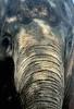 Mamma Africa (:: Flavio Cond ::) Tags: elephant animal rio zoo zoológico tromba elefante paquiderme flavioconde cfrj flaviocondé