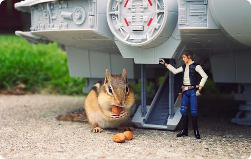 ardilla y Han Solo de Star Wars
