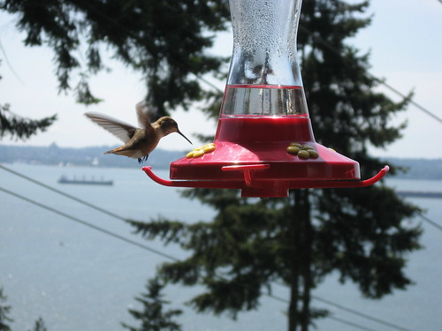 Hummingbird at the Feeder by you.
