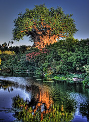 The Tree of Life and Discovery River (IceNineJon) Tags: wood travel trees sky plants plant reflection tree water river bush unitedstates florida disney palmtrees waterlilies palmtree wdw waltdisneyworld hdr themepark animalkingdom disneysanimalkingdom discoveryisland nymphaeaceae thetreeoflife explored 31kmswoforlando discoveryriver
