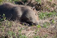 baudchon-baluchon (17 sur 43)