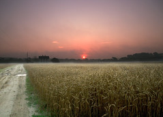 Wallops Island Field at Sunrise (lacomj) Tags: field sunrise farm wallops chintoteague
