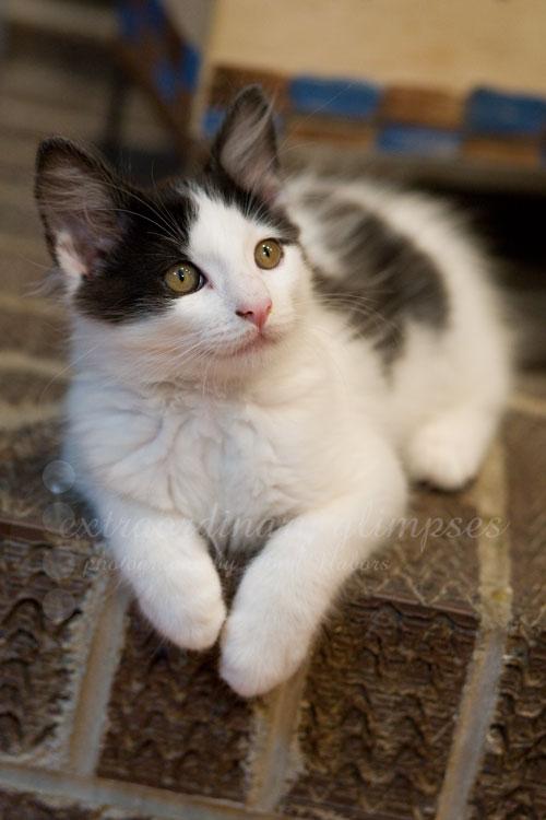 KittenDots_Aug012009_0007web