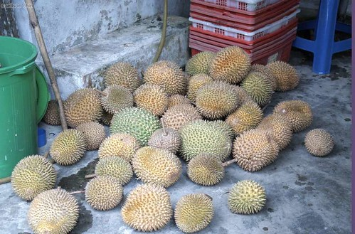 durian_03
