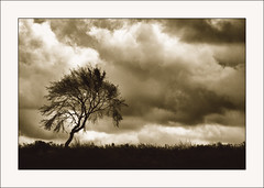 Tree (July 2009) (Lazlo Woodbine) Tags: england blackandwhite bw tree nature silhouette sepia landscape mono countryside blackwhite natural britain derbyshire duotone hdr fz50 beeleymoor hdrfromsingleraw thesecretlifeoftrees