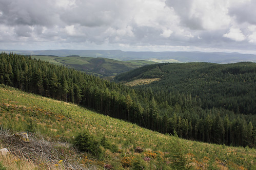 Forest near Corris