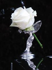 Rose Royce (Autoscaph) Tags: white black flower art rose silver spirit rollsroyce bentley