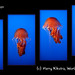 jellyfish-quarter-woab-sat-sm