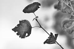 Anglų lietuvių žodynas. Žodis tattered reiškia a  sudriskęs, suplyšęs; nuplyšęs, nudriskęs, apiplyšęs, skarmaluotas 2 žlugęs, suardytas, sugriautas (apie viltį ir pan.) lietuviškai.