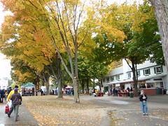 Rhinebeck Fall