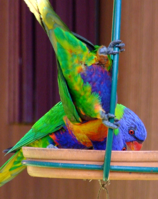 greedy birds