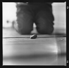 Fish (Coffinradio) Tags: light bw 3 fish 6x6 licht head fisch kiev beine steg 80mm fomapan volna leck