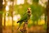 Caturita (Jaimir Marcon Fotografias) Tags: fauna flora plantas natureza animais fotografo bacurau bentivi jaimir jaimirimagens imagenscaturita naturezagaucha