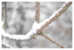 Pine pattern (leo.roos) Tags: pine swirly branches takken winter snow sneeuw a7s meyertrioplan42cmf35 1936 fixedlens photaviti dayprime day42 dayprime2017 dyxum challenge prime primes lens lenzen brandpuntsafstand focallength fl darosa leoroos