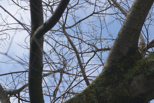 2017-02-18 Twigs Test - Take 8 [#3]