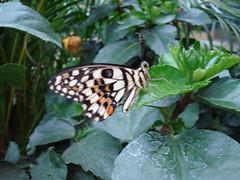 London 2009- Butterflies Jungle