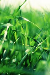 ... (ammoniumchlorid) Tags: summer green grass bokeh natureycrap