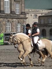 Hestens Vrn - The foundation for Protection of Horses (Scattered Rayn) Tags: horse animal copenhagen riding pony mounted rider horseback christiansborg hestensvrn