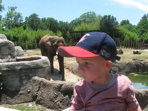 Flat Stanley Elephant