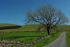 One lane road in rural Sheriffmuir, Scotland