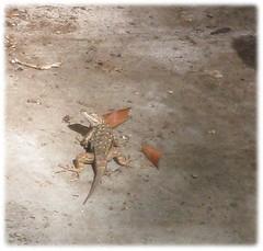 1806_lizardb