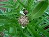 """""""Le jardin Magique"""" (balavenise) Tags: flores flower fleur garden spring couleurs jardin istanbul bahçe printemps artichoke magie çiçek mystère artichaut enginar atmosphère lejardinmagique"""