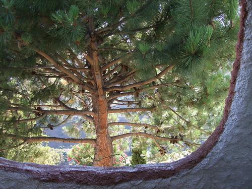 Frigiliana Tree