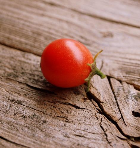 one lone tomato 1