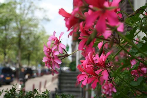 puur amsterdam wandeling bedrijfsuitje 075 by you.