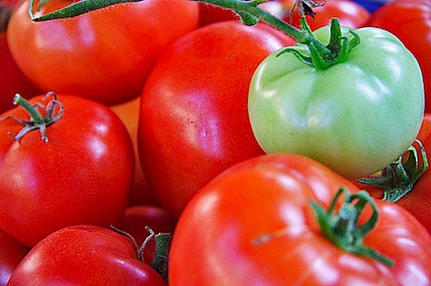 Tomatoes-one-green.jpg