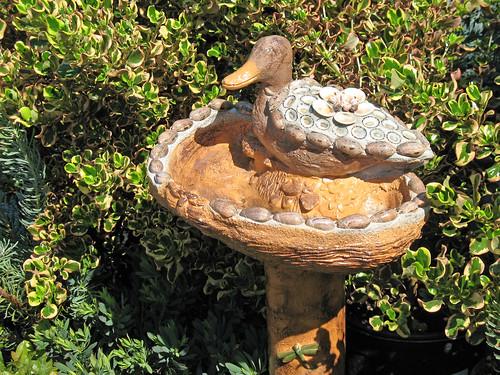 duck on a bird bath