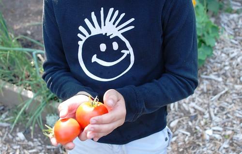 happy tomatos