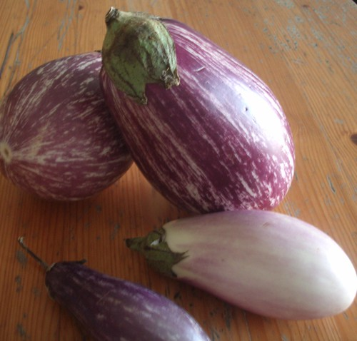 Purple Eggplants on My Table