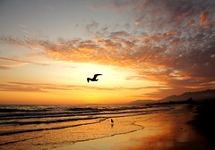 flight at sunset (Andy Kennelly) Tags: ocean california sunset mountain fall beach water clouds sand surf waves pacific seagull flight hills kennelly platinumphoto