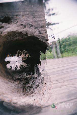 枯木(連續曝光兩次)
