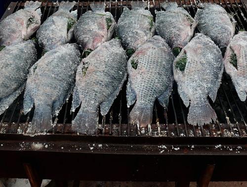 דגים במלח