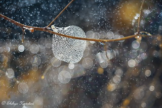The One Memory Of Winter