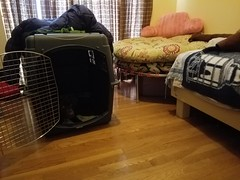 Sleep Set-Up (PetiteFamily93) Tags: pax sleeping kennel office