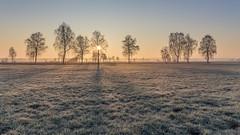 Long shadows (Sebo23) Tags: morgenstimmung morninglight morgenlicht licht light sonnenaufgang sunrise kalt cold gras tree trees bäume landscape landschaft canon6d canon24704l