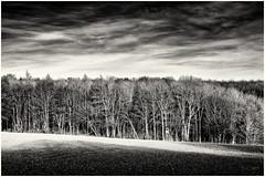 Hidden raised Hide... (Ody on the mount) Tags: anlässe bäume em5ii fototour hires himmel landschaft mzuiko4518 omd pflanzen schwäbischealb wald wolken bw monochrome sw eningenunterachalm badenwürttemberg deutschland de