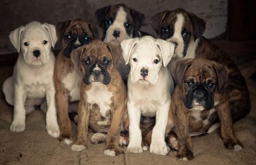 Puppies Keeping Warm