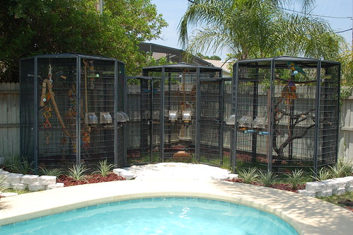 Photo By Jamieleigh Location: Orlando, FL Cages From Cages By Design (Now  Customcages.com)
