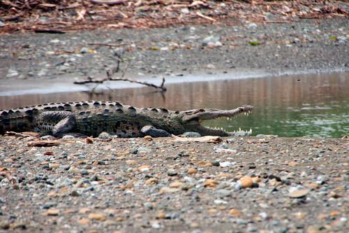 Parque Nacional Corcovado-133