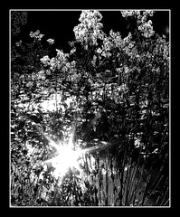 Sun et lumiere (philwirks) Tags: light blackandwhite bw sun sunlight public water monochrome picnik myfavs luminosity philrichards creativephoto yourbestphotography yourpreferredpicture show08 unlimitedphotos